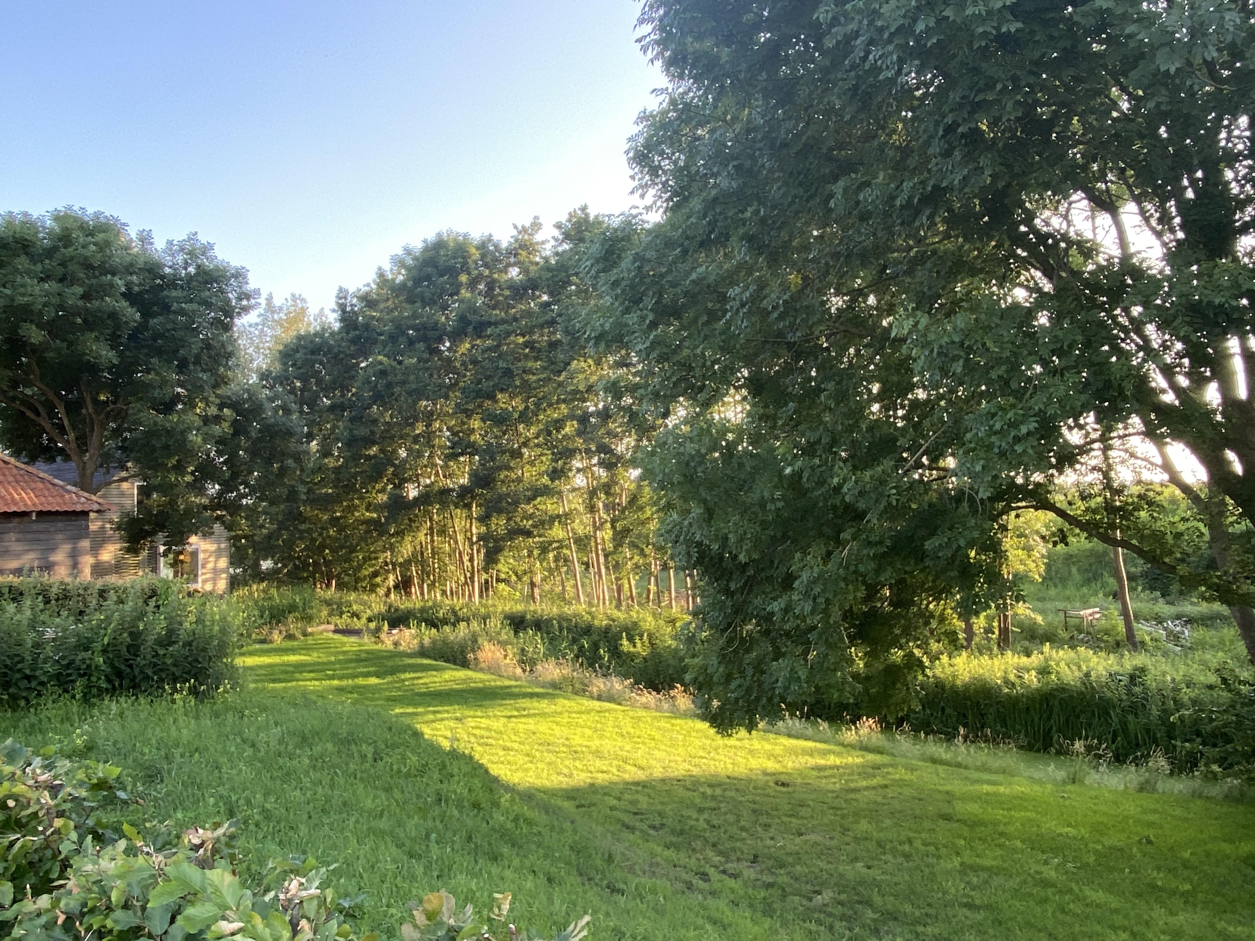 Gras gemaaid in Stadshagen